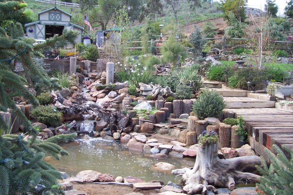 woody pond
